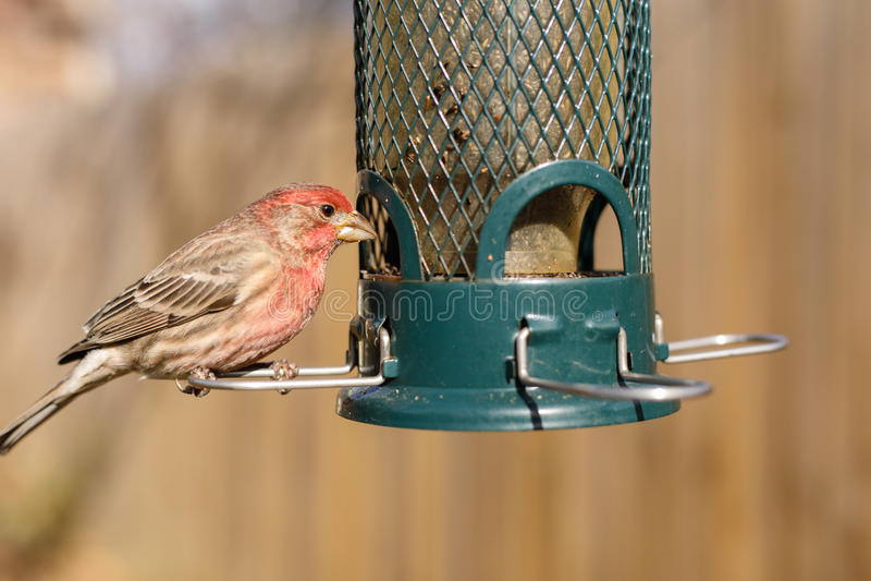 Σίτιση πουλιών στον τροφοδότη κατωφλιών στοκ φωτογραφίες