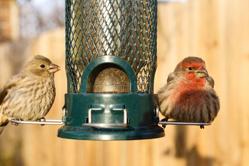 Σίτιση πουλιών στον τροφοδότη κατωφλιών στοκ φωτογραφία με δικαίωμα ελεύθερης χρήσης
