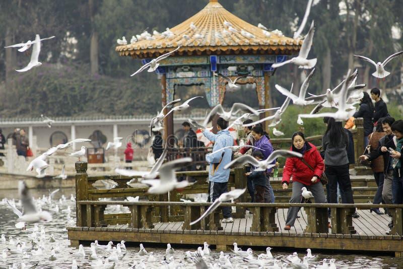 Σίτιση πουλιών στοκ φωτογραφία