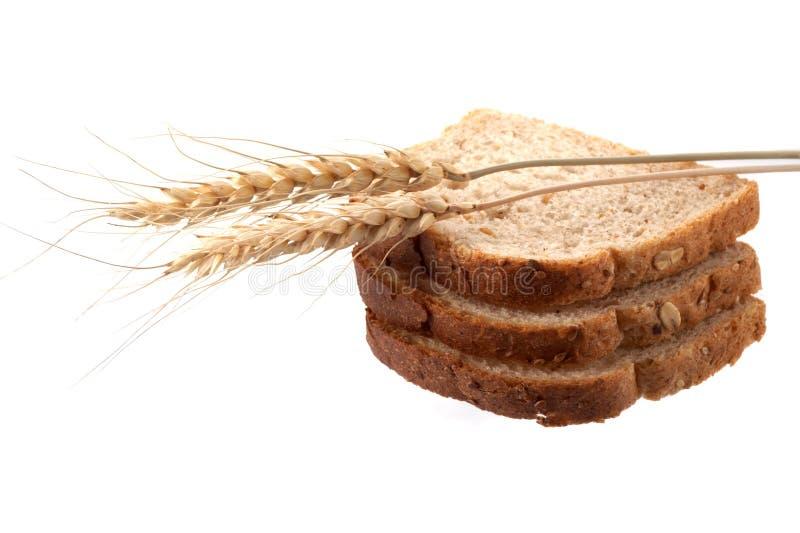 σίτος ψωμιού στοκ εικόνες με δικαίωμα ελεύθερης χρήσης