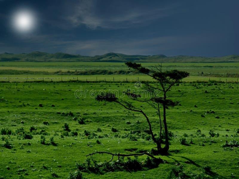 Download σαβάνα στοκ εικόνες. εικόνα από alon, σαβάνα, δέντρο, ήρεμος - 12364