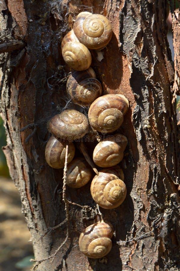 Σαλιγκάρια οκνηρά σε έναν κορμό δέντρων στοκ φωτογραφίες