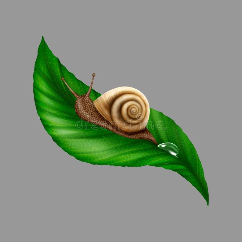 Σαλιγκάρι απεικόνισης σε ένα φύλλο στοκ εικόνα