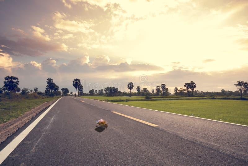 Σαλιγκάρι που σέρνεται αργά πέρα από το δρόμο στοκ εικόνα