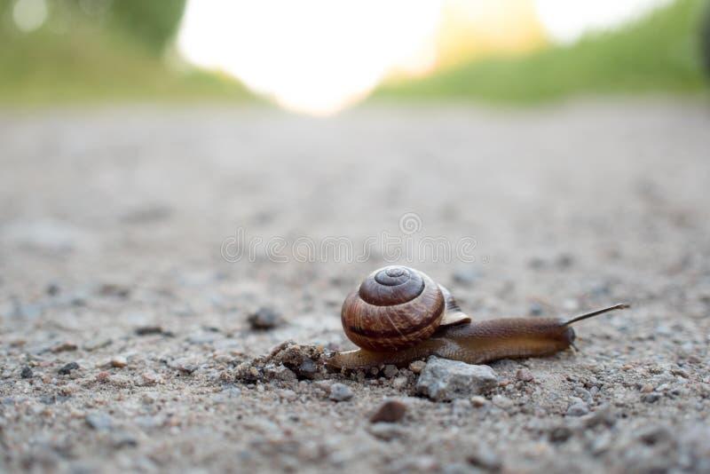Σαλιγκάρι που σέρνεται πέρα από το δρόμο, επιθετικά που προωθεί, η έννοια στοκ φωτογραφία με δικαίωμα ελεύθερης χρήσης