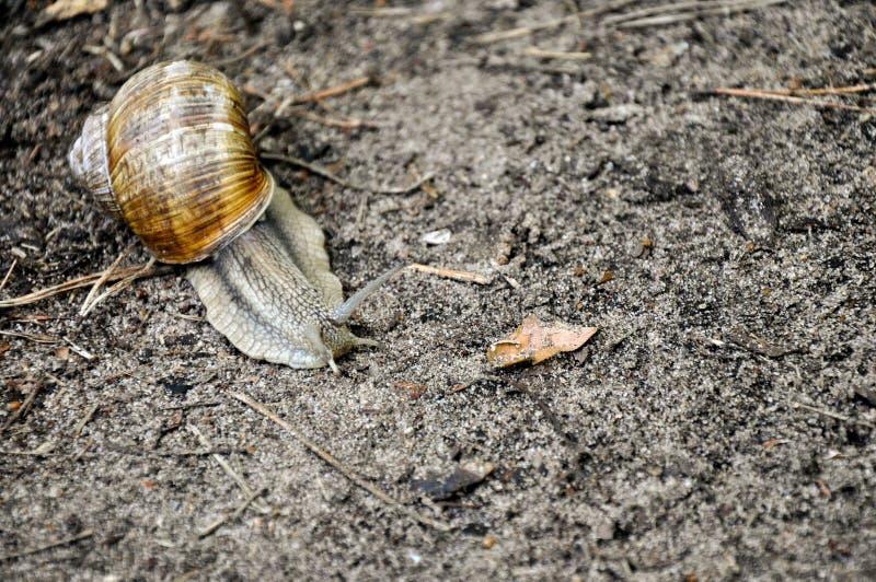 Σαλιγκάρι που σέρνεται στο έδαφος στοκ φωτογραφίες