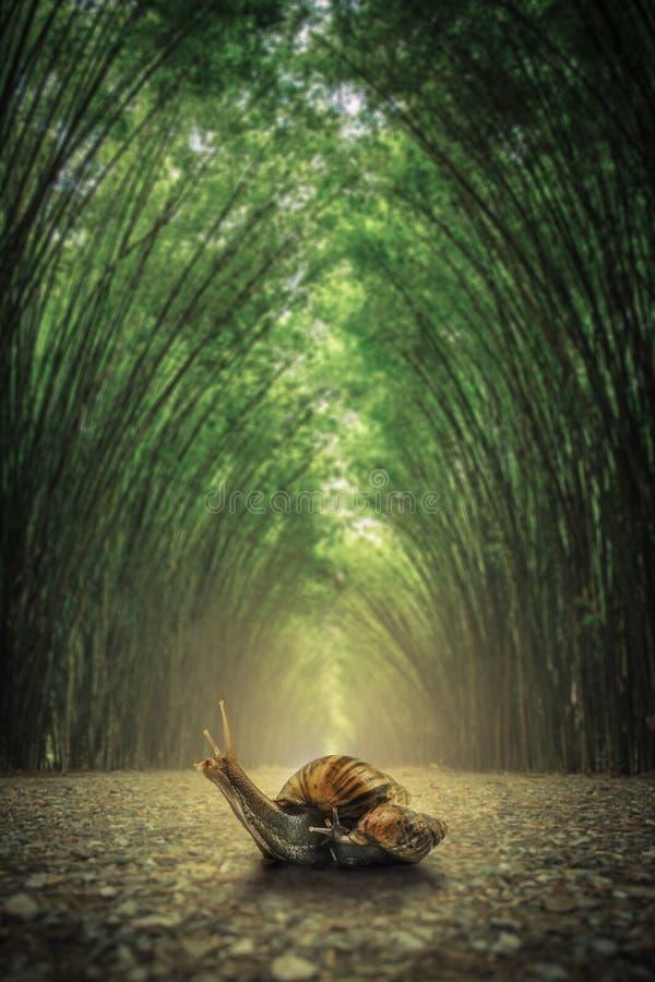 Σαλιγκάρι στο έδαφος Η πορεία που πλαισιώνεται από δύο πλευρές χωρίς το δασικό υπόβαθρο μπαμπού στοκ εικόνα με δικαίωμα ελεύθερης χρήσης
