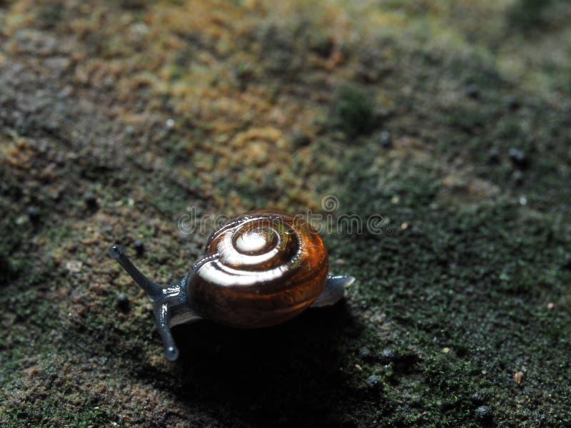 Σαλιγκάρι στο κούτσουρο στοκ φωτογραφία με δικαίωμα ελεύθερης χρήσης