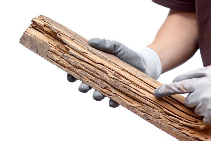 Σανίδα που καταστρέφεται ξύλινη από τους τερμίτες στοκ φωτογραφίες με δικαίωμα ελεύθερης χρήσης