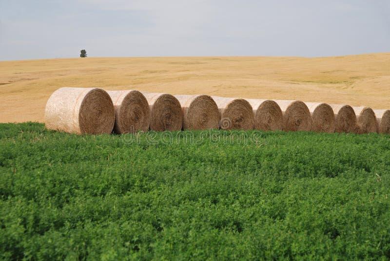 σανός καλλιεργήσιμου &epsilon στοκ εικόνες