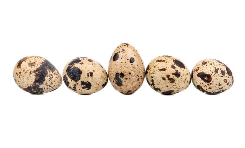 σαν αυγά ανασκόπησης πολλές νησοπέρδικες στοκ φωτογραφία