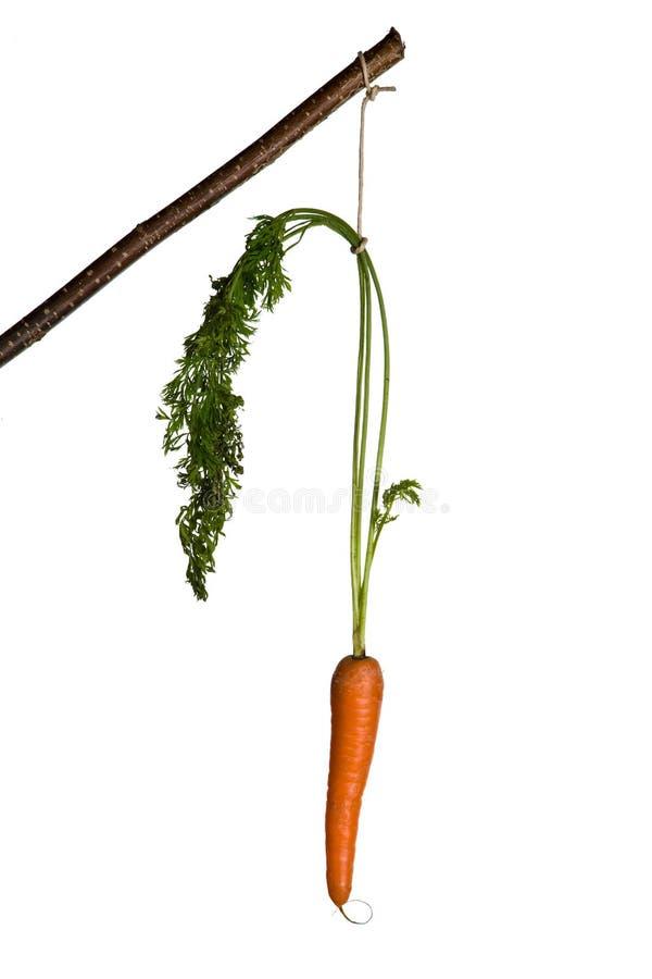 σαν καρότο που τρώει το ρ&alpha στοκ εικόνα με δικαίωμα ελεύθερης χρήσης