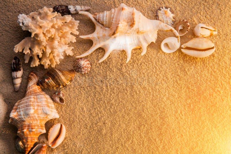 σαν στενά κοχύλια θάλασσας άμμου ανασκόπησης επάνω παραλιών ακτών θερινή κυματωγή πετρών άμμου της Κύπρου μεσογειακή στοκ φωτογραφία