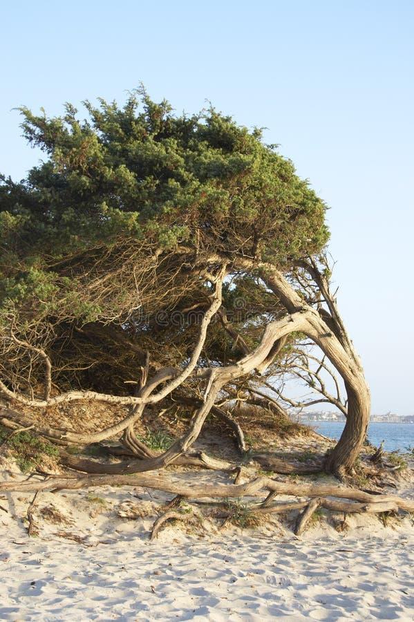 Download Σαρδηνία στοκ εικόνες. εικόνα από ιταλία, θάλασσα, άγριος - 379568