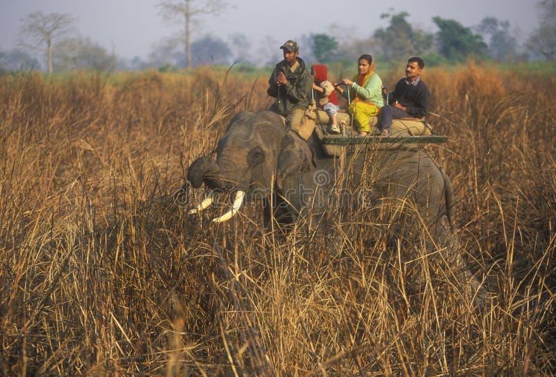 σαφάρι ελεφάντων στοκ εικόνες με δικαίωμα ελεύθερης χρήσης