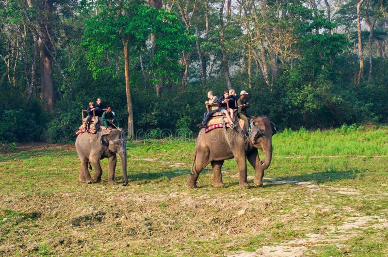 Σαφάρι ελεφάντων σε Chitwan, Νεπάλ στοκ εικόνα με δικαίωμα ελεύθερης χρήσης