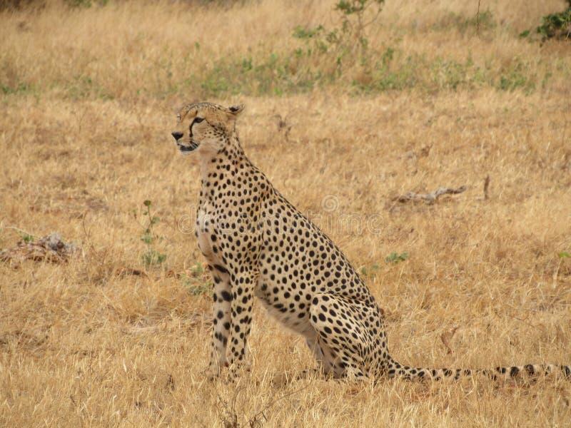Σαφάρι στο kenia στοκ φωτογραφία με δικαίωμα ελεύθερης χρήσης