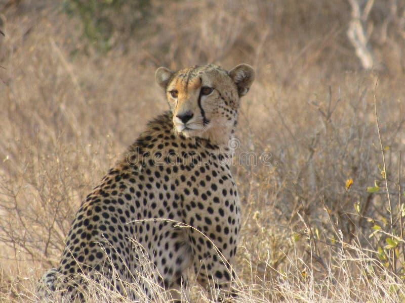 Σαφάρι στο kenia στοκ φωτογραφίες