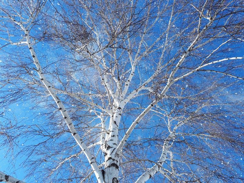 Σαφές υπόβαθρο δέντρων ουρανού χειμερινού πρωινού στοκ εικόνες