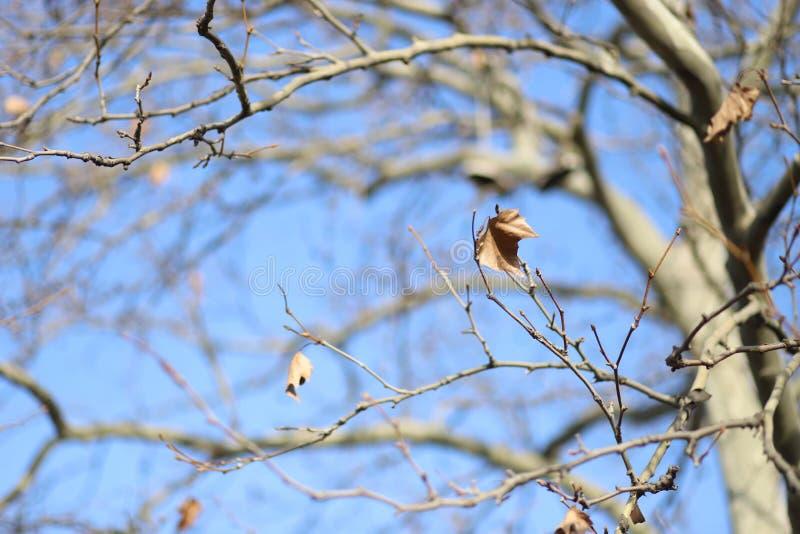 Σαφής χειμώνας στοκ φωτογραφία με δικαίωμα ελεύθερης χρήσης