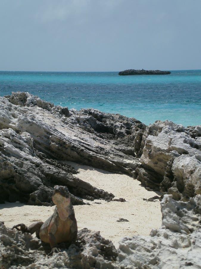 Σαύρα στην παραλία στοκ φωτογραφία με δικαίωμα ελεύθερης χρήσης