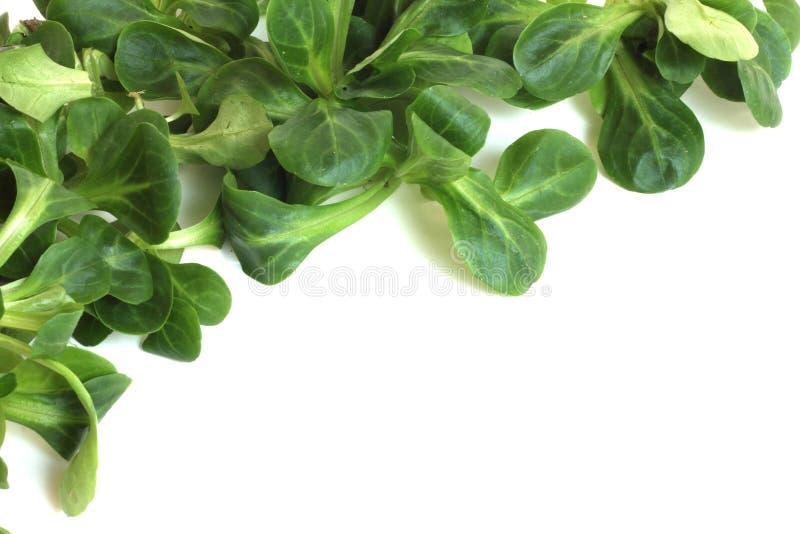 Σαλάτα καλαμποκιού στοκ εικόνες
