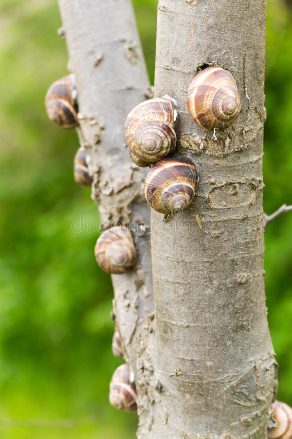 Σαλιγκάρια εδάφους σε ένα δέντρο στοκ εικόνα με δικαίωμα ελεύθερης χρήσης