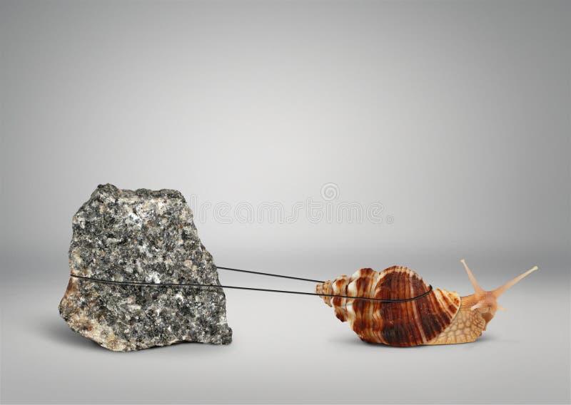 Σαλιγκάρι που τραβά τη μεγάλη πέτρα, αργά έννοια εμμονής στοκ φωτογραφία με δικαίωμα ελεύθερης χρήσης