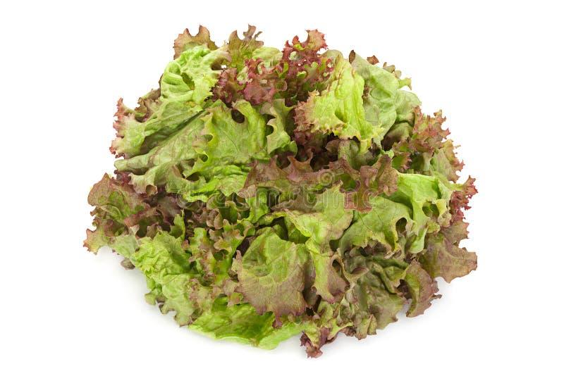 Σγουρό χορτάρι σαλάτας στο λευκό στοκ εικόνα