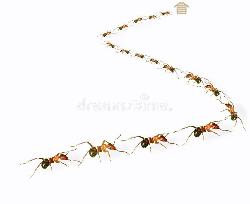 Σειρά αναμονής μυρμηγκιών στοκ φωτογραφίες με δικαίωμα ελεύθερης χρήσης