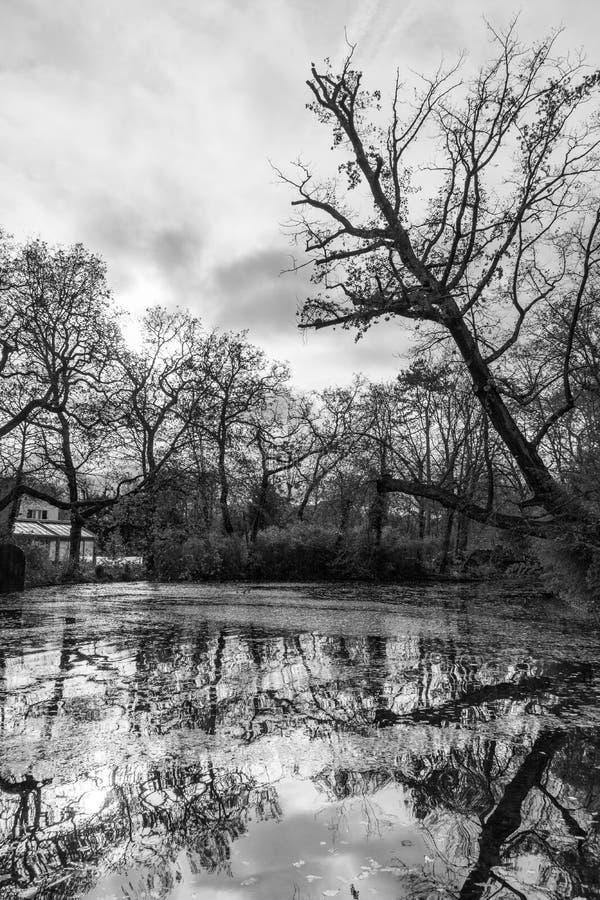 Σειρά δέντρου στη λίμνη στοκ εικόνες με δικαίωμα ελεύθερης χρήσης