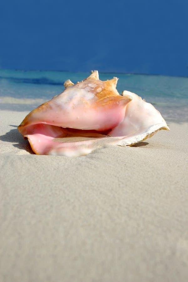 σειρά παραλιών conch στοκ φωτογραφία