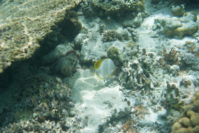 Σειρά ψαριών στοκ φωτογραφία με δικαίωμα ελεύθερης χρήσης