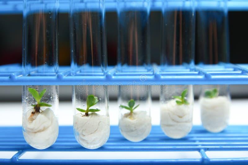 Σειρά 2 βιοτεχνολογίας φυτού στοκ εικόνες