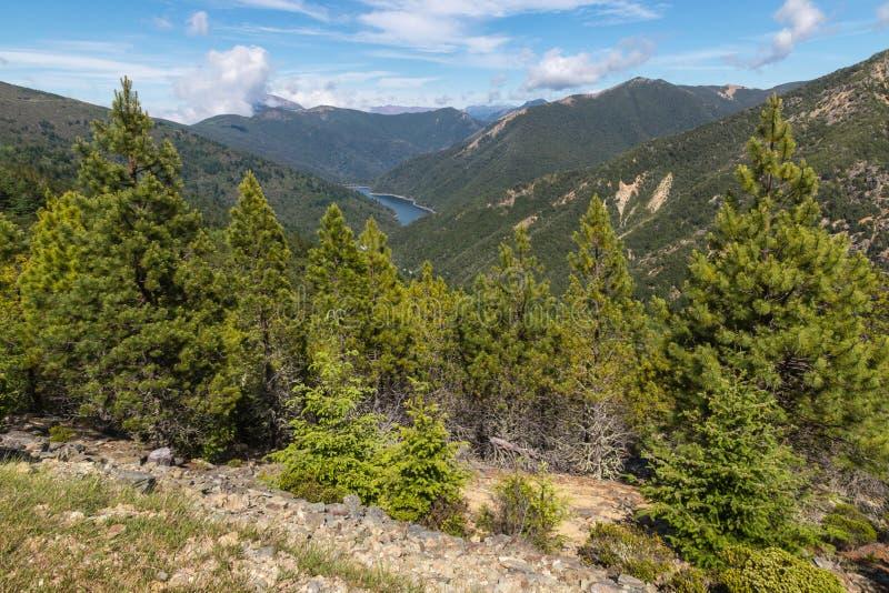 Σειρές βουνών με το δάσος δέντρων πεύκων στο Forest Park του Ρίτσμοντ υποστηριγμάτων, Νέα Ζηλανδία στοκ φωτογραφίες