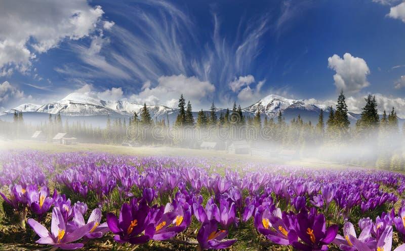 Σειρές βουνών της Ουκρανίας στοκ φωτογραφία με δικαίωμα ελεύθερης χρήσης