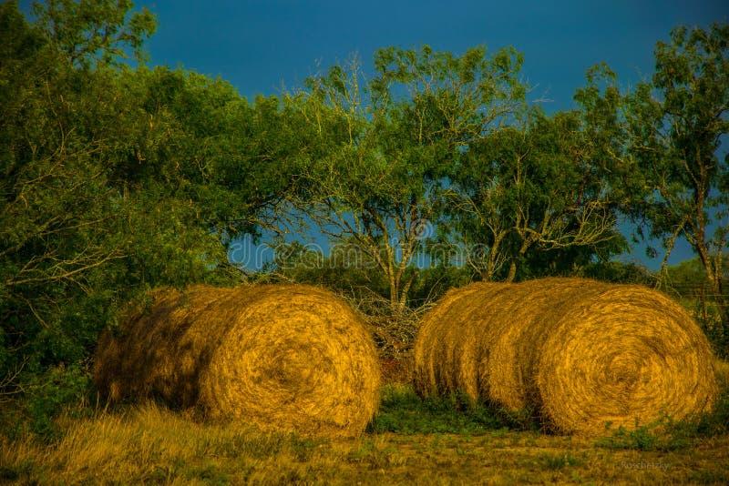 Σειρές του αγροκτήματος του νότιου Τέξας δύο σειράς δεμάτων σανού στοκ εικόνα