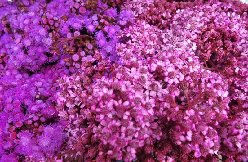 Σειρές του ιώδους λουλουδιού χρώματος στοκ φωτογραφία