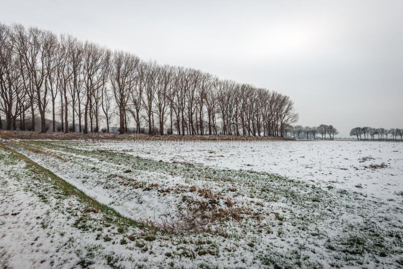Σειρές των γυμνών δέντρων σε ένα χειμερινό τοπίο πόλντερ στοκ φωτογραφίες με δικαίωμα ελεύθερης χρήσης