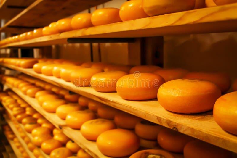 Σειρές των κομματιών τυριών στα ξύλινα ράφια στο κατάστημα ή στο εργοστάσιο γάλακτος Διαφορετικά είδη τυριών στα ράφια στοκ φωτογραφία με δικαίωμα ελεύθερης χρήσης