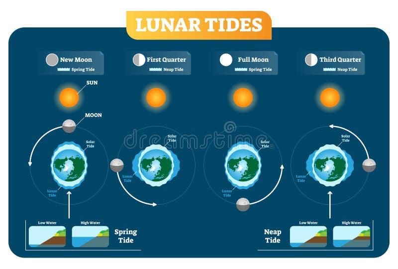 Σεληνιακή και ηλιακή αφίσα διαγραμμάτων απεικόνισης παλιρροιών διανυσματική Παλίρροια άνοιξη και παλίρροιας των νεκρών υδάτων διανυσματική απεικόνιση