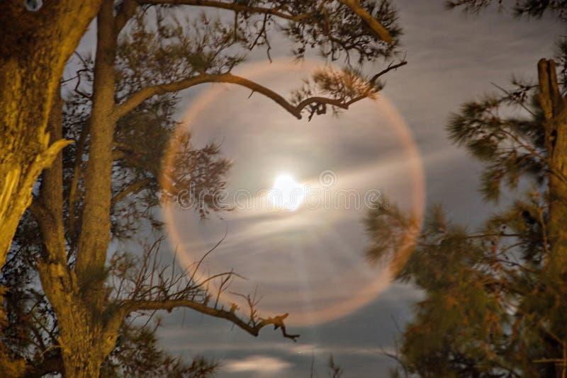Σεληνιακός φωτοστέφανος στους κλάδους μιας ερυθρελάτης στοκ εικόνα