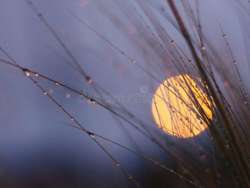 Σεληνόφωτο πίσω από τη δροσοσκέπαστη χλόη στοκ εικόνα