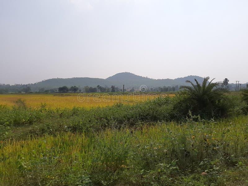 Σενάριο ενός λόφου με τα paddys στοκ εικόνα