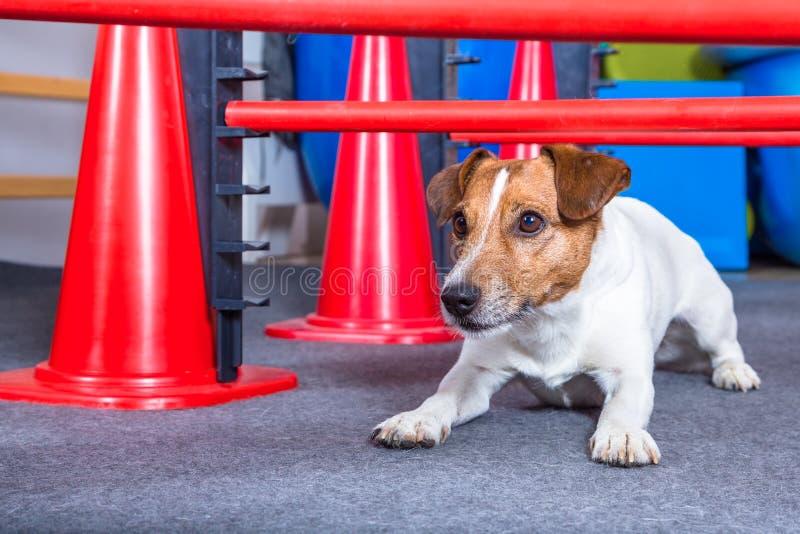 σερνμένος σκυλί στοκ φωτογραφίες