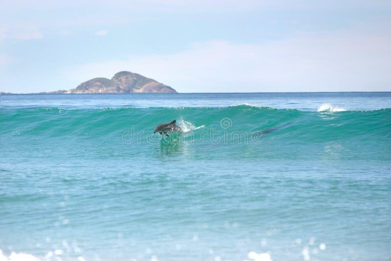 σερφ δελφινιών στοκ φωτογραφίες