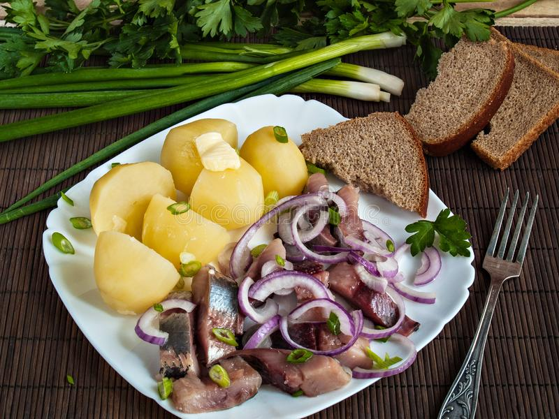 Σε ένα λευκό το πιάτο είναι μια βρασμένη πατάτα και μια τεμαχισμένη αλατισμένη ρέγγα στοκ φωτογραφίες με δικαίωμα ελεύθερης χρήσης