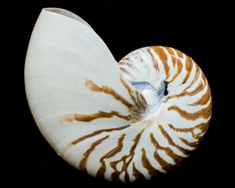 Σε θάλαμο θαλασσινό κοχύλι Nautilus στοκ φωτογραφίες