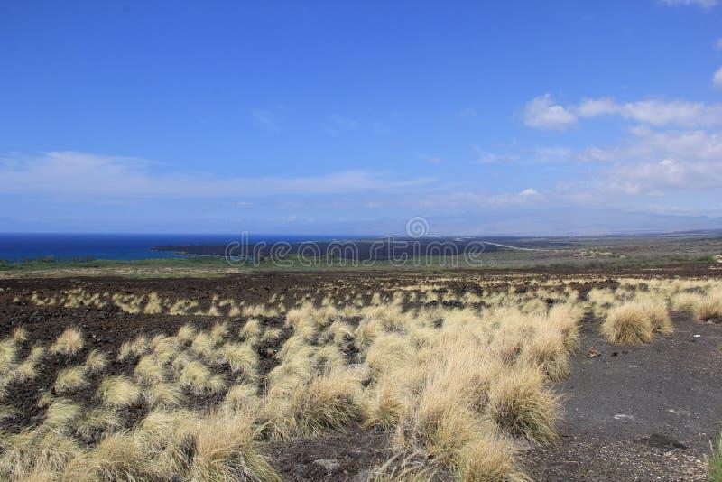 Σε μια παραλία Θάλασσα η άμμος λικνίζει τη φύση της Χαβάης ηλιόλουστη λίμνη φοινίκων στοκ εικόνα με δικαίωμα ελεύθερης χρήσης