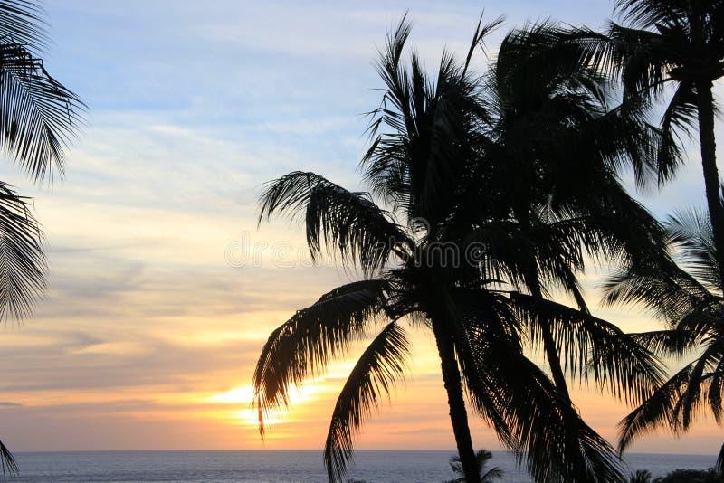 Σε μια παραλία Θάλασσα η άμμος λικνίζει τη φύση της Χαβάης ηλιόλουστη λίμνη φοινίκων στοκ φωτογραφίες με δικαίωμα ελεύθερης χρήσης